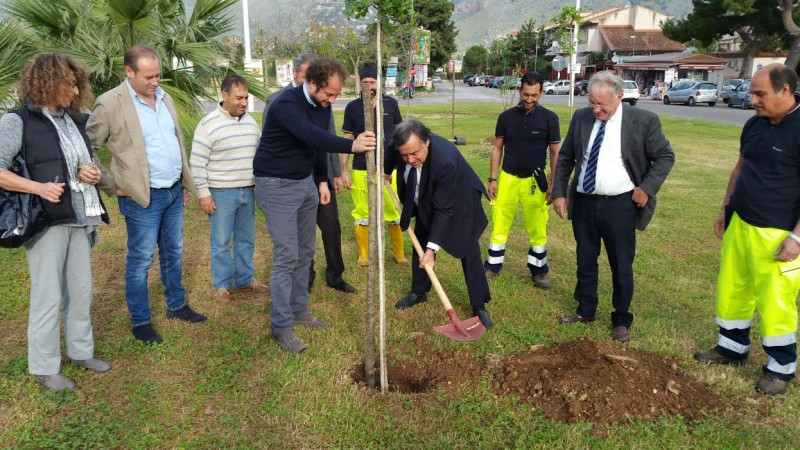 Mille alberi donati a Palermo. Nove piantati anche dal sindaco Orlando