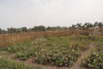 Piogge in Sicilia dopo un inverno asciutto: risvolti positivi per l'agricoltura
