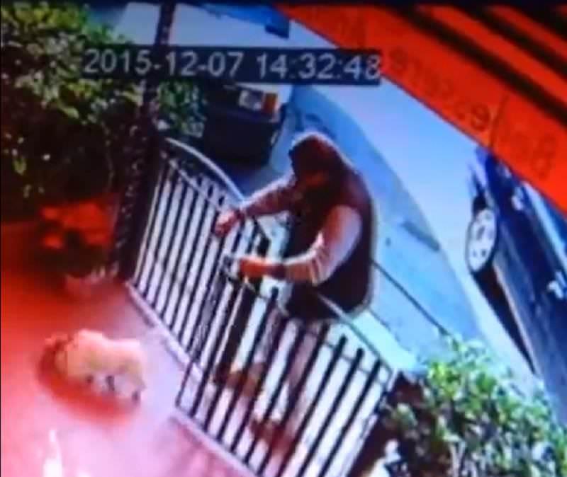 Abbandona il cane nel giardino di un negozio di animali ma a filmarne il gesto c'erano le telecamere