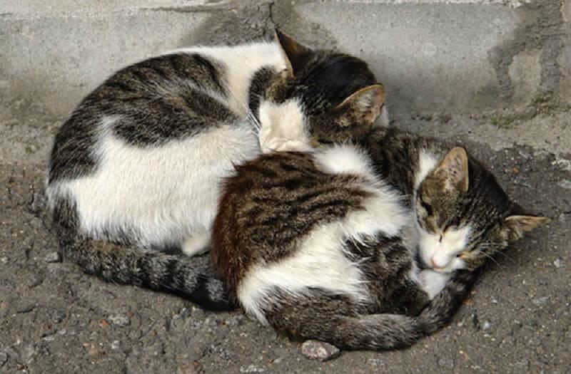 Sterminio di gatti in un cortile: trovate 11 carcasse, sospetto avvelenamento