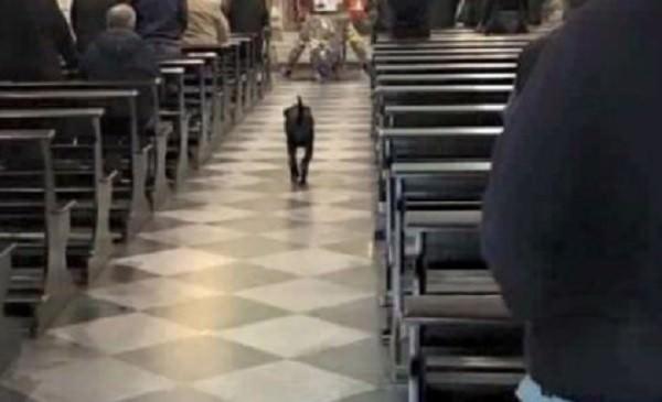 Ferito Leo, il cane che ha commosso Favignana