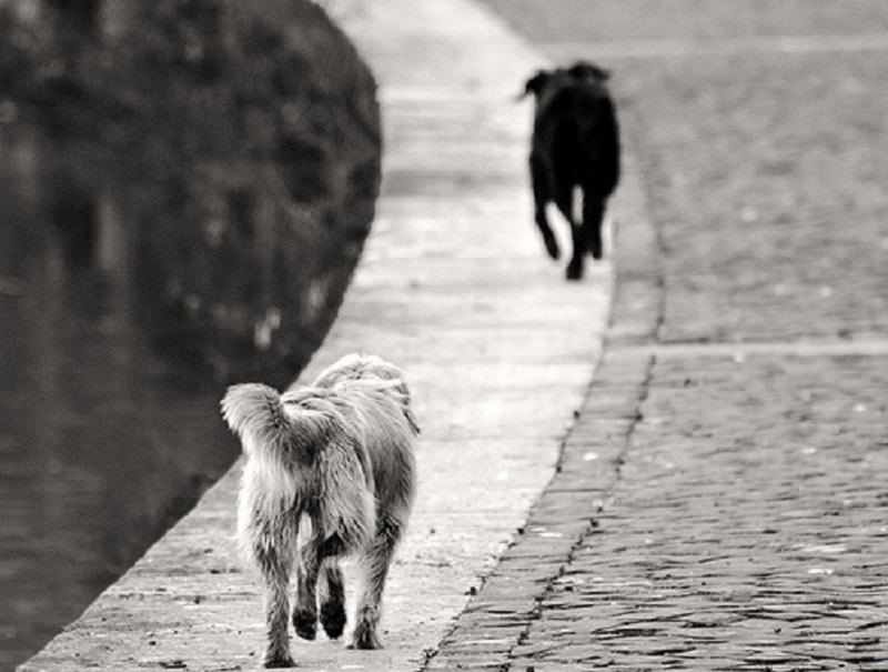 Palermo, avvelenati tre cani randagi