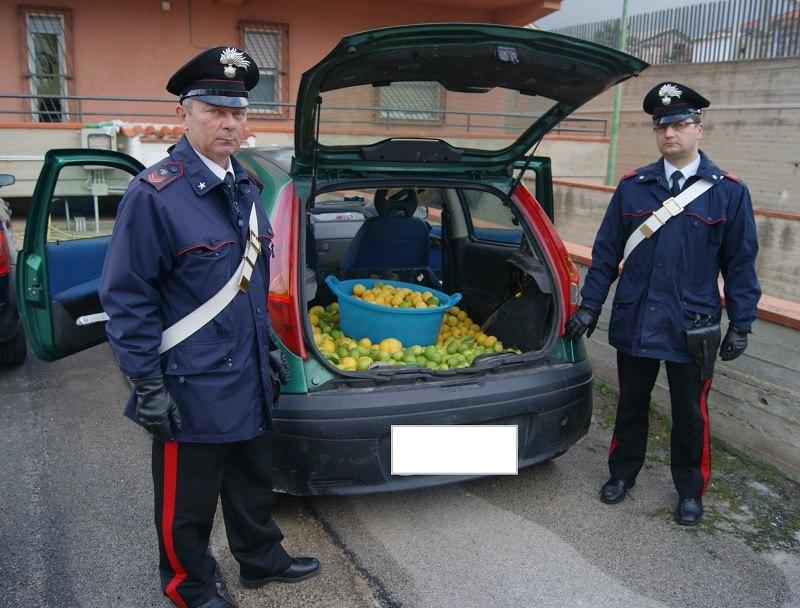 Partinico, rubavano limoni nel terreno di un pensionato: arrestati