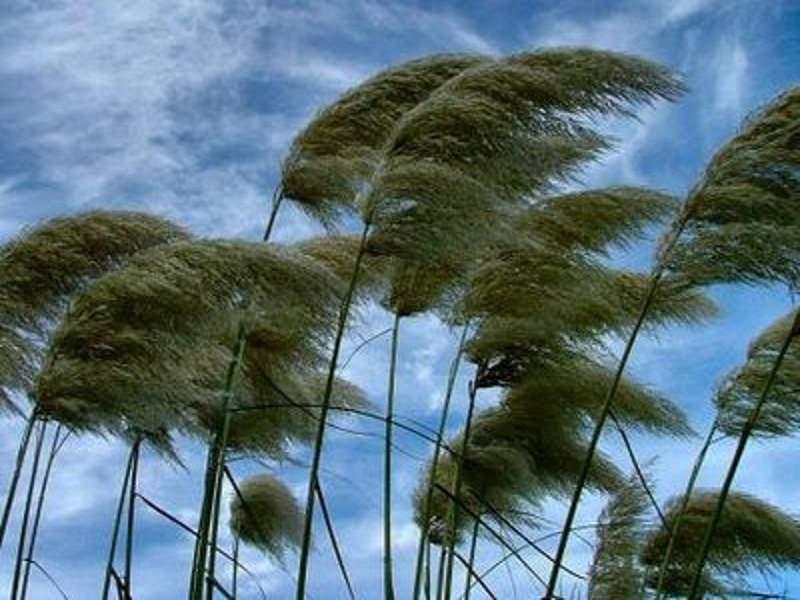 Sicilia k.o. per il forte vento: chiusi aeroporto di Palermo e statale 113. In arrivo perturbazione