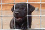 Tortura cucciolo di cane, ragazza cerca di difenderlo: padrone la picchia e fugge