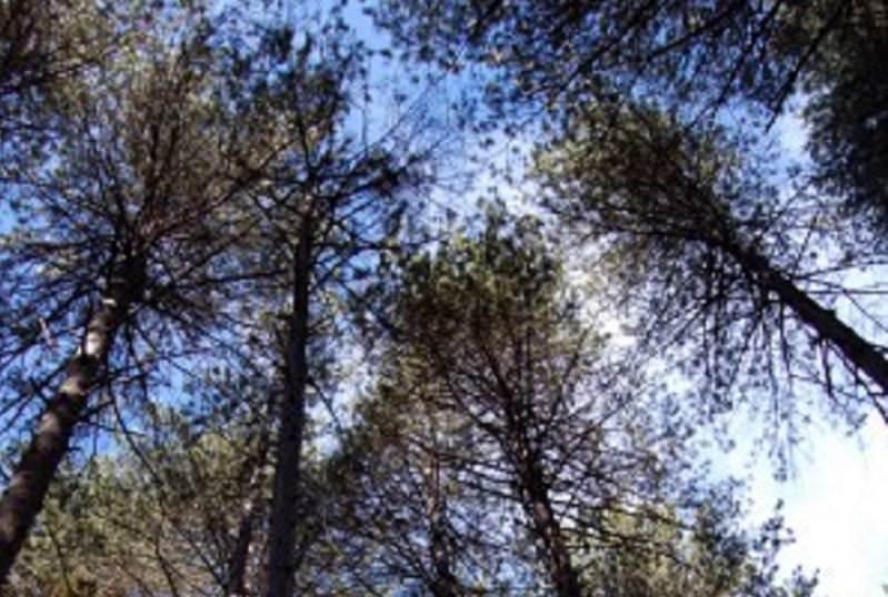 """Parte domenica """"Sentiero delle Ginestre"""": Nicolosi si collega a Linguaglossa"""