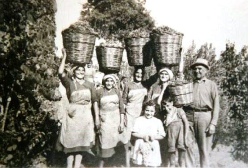 La grande storia dei vini dell'Etna attraverso gli scatti dell'epoca