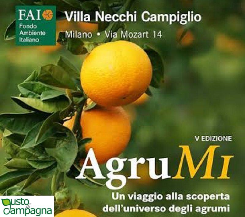 """""""AgruMI – Un mondo di agrumi"""", un viaggio alla scoperta del sapore della Sicilia"""