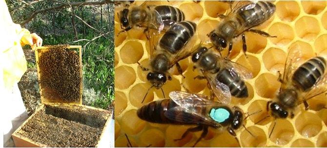 Danni all'apicoltura, dal governo Musumeci via libera allo stato di calamità naturale