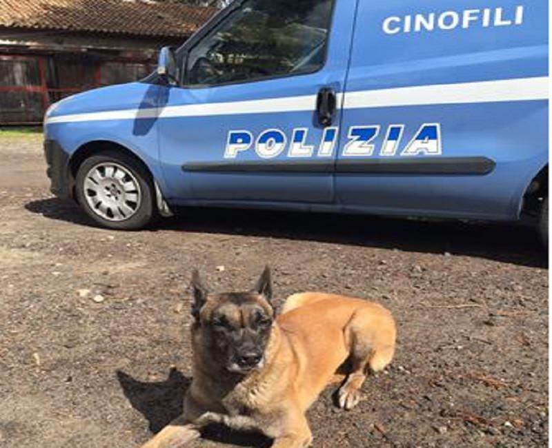 """Catania, pusher """"fantasma"""" in via Capo Passero: cocaina e marijuana senza """"proprietario"""". Trovato anche un cavallo"""