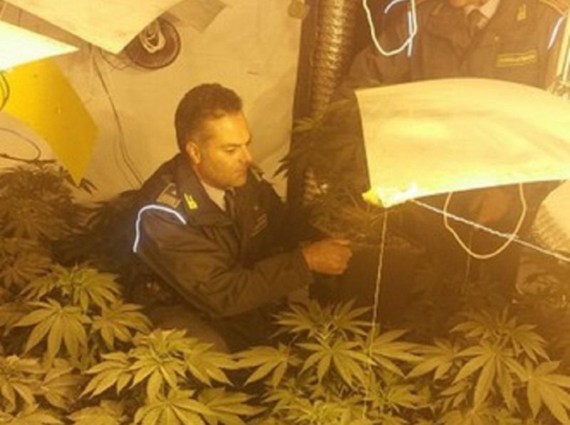 Centrale di spaccio in casa, 128 piante di cannabis. Arrestati coniugi a Falsomiele