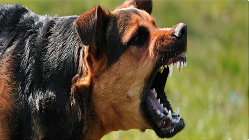 Bimbo azzannato da un cane, operazione nella notte: resta in prognosi riservata