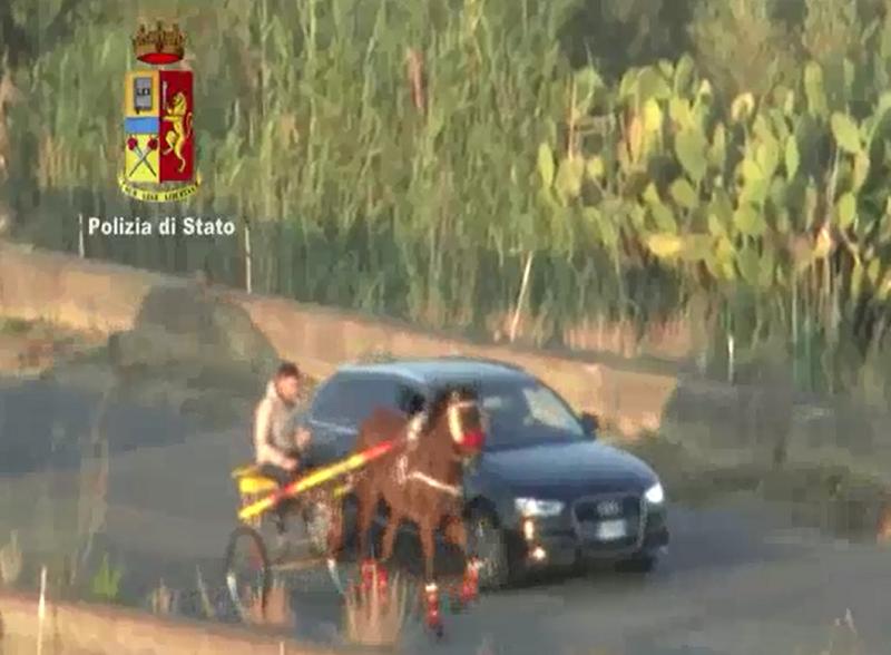 Il business delle corse clandestine. Blitz durante una gara a Palagonia, i cavalli feriti. IL VIDEO