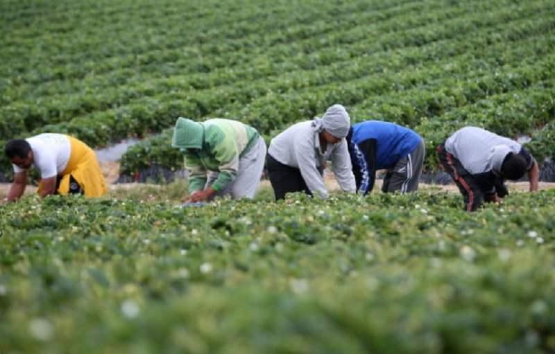 Operazione Ladybug, scoperti oltre 150 falsi braccianti agricoli: così truffavano l'INPS per i soldi pubblici – IL VIDEO