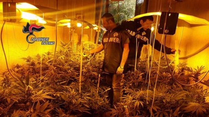 Padre e figlio coltivavano marijuana in casa. Sequestrate 500 piante