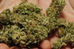 Marijuana e bilancino di precisione nascosti tra i cuscini del divano-letto: arrestato 20enne incensurato