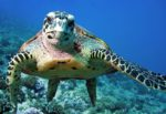 Tartaruga in difficoltà a Lipari, muore durante i tentativi di salvataggio