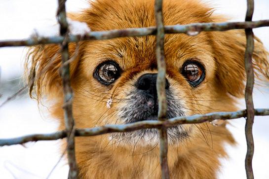 #ionontimangio, Festival della carne di cane in Cina: fermiamo il massacro