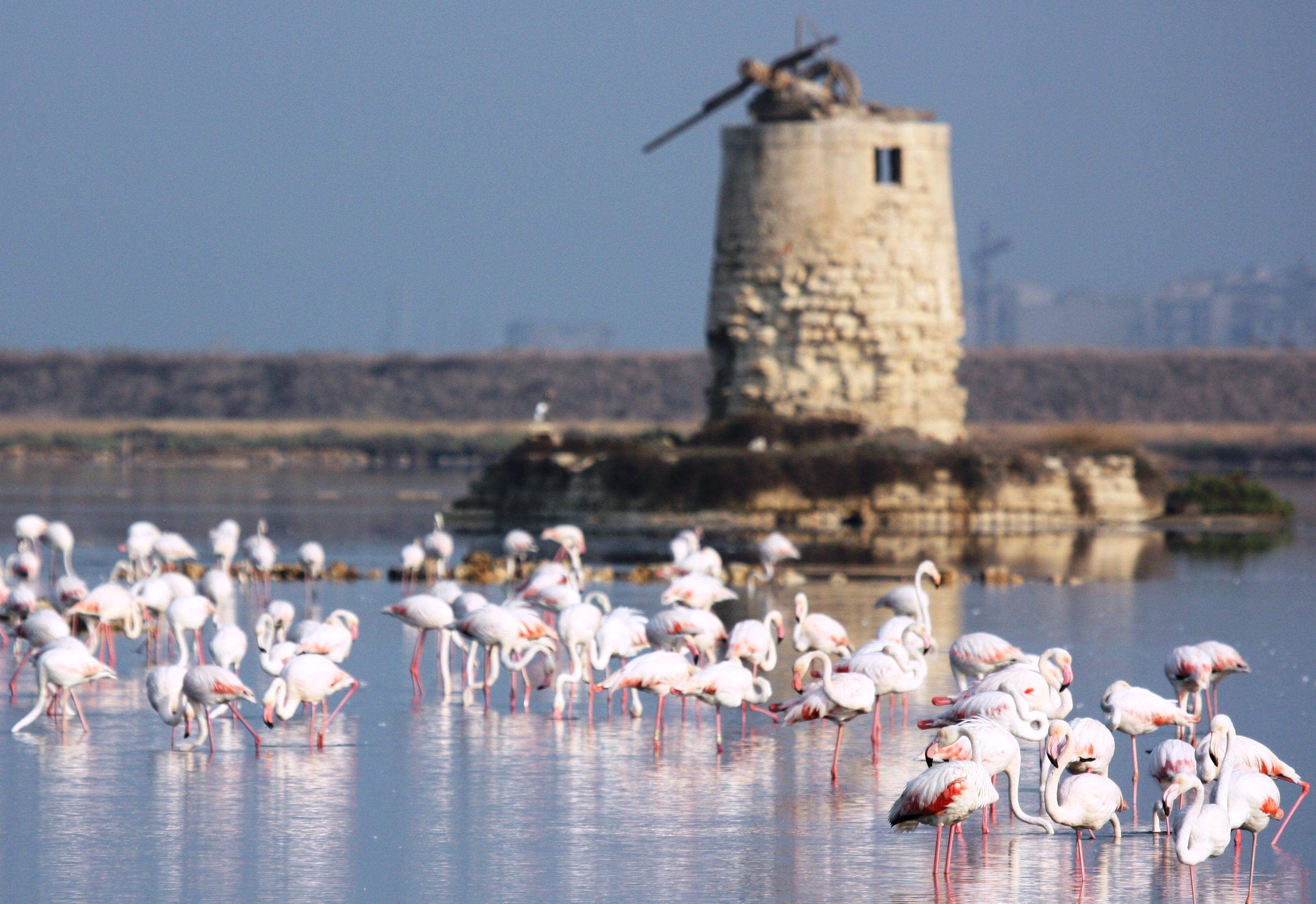 I 50 anni del WWF a Trapani: visite guidate e birdwatching