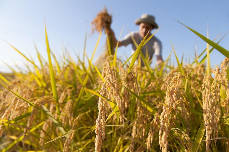 """Finanziamento di 660 milioni di euro per l'agricoltura, Scardino (Cia): """"Il nostro commento è positivo"""""""
