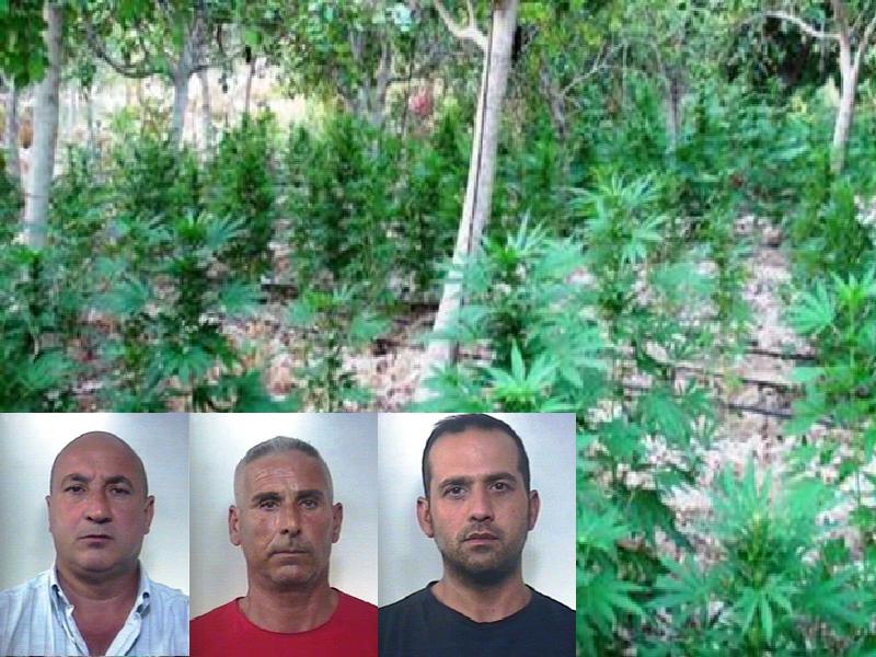 Maxi-sequestro di canapa indiana a Licodia: arrestati i quattro coltivatori