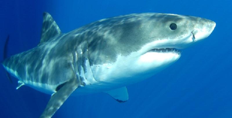 Catania, coppia di turisti minacciata da uno squalo