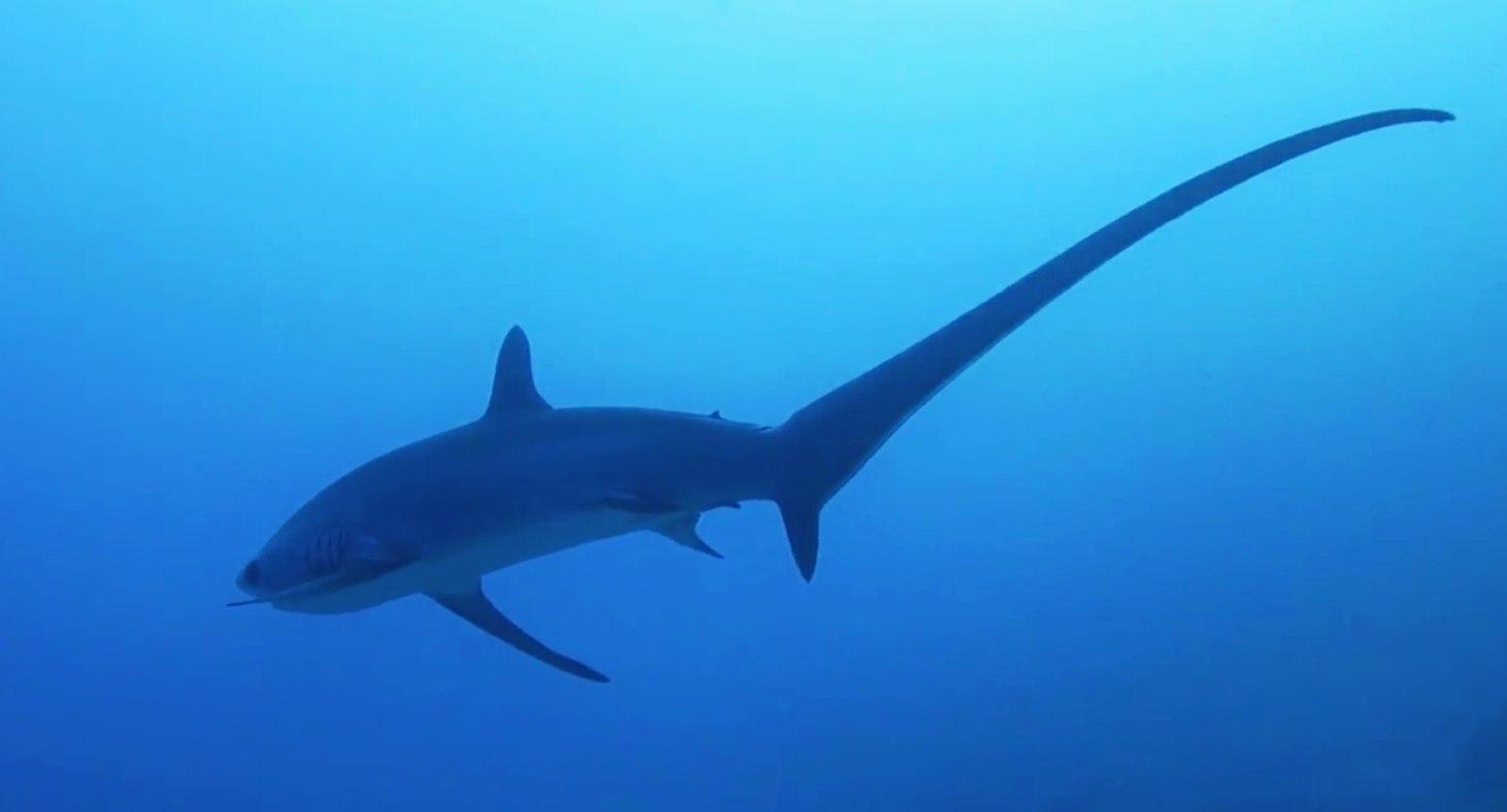 Si tuffa in acqua, squalo gli stacca gamba e parte dell'addome: bimbo in ospedale