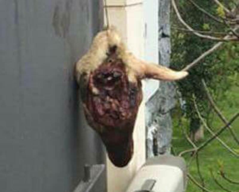 Atto intimidatorio contro attivista grillino: testa di capretto nel giardino
