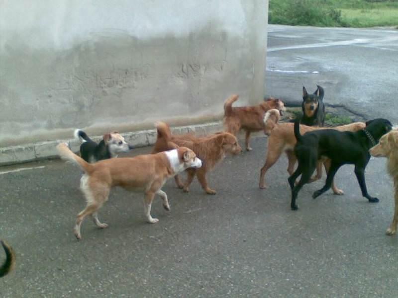 """Cani """"trovatelli"""" avranno finalmente una casa: nasce il primo ambulatorio per randagi in Sicilia"""