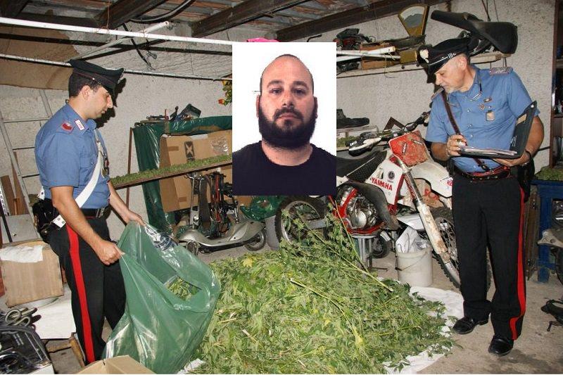 Coltivava cannabis: arrestato 33enne