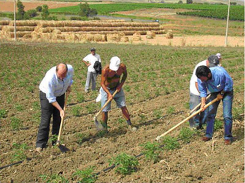 Assumono per finta braccianti agricoli: truffa all'Inps da 1,5 mln di euro