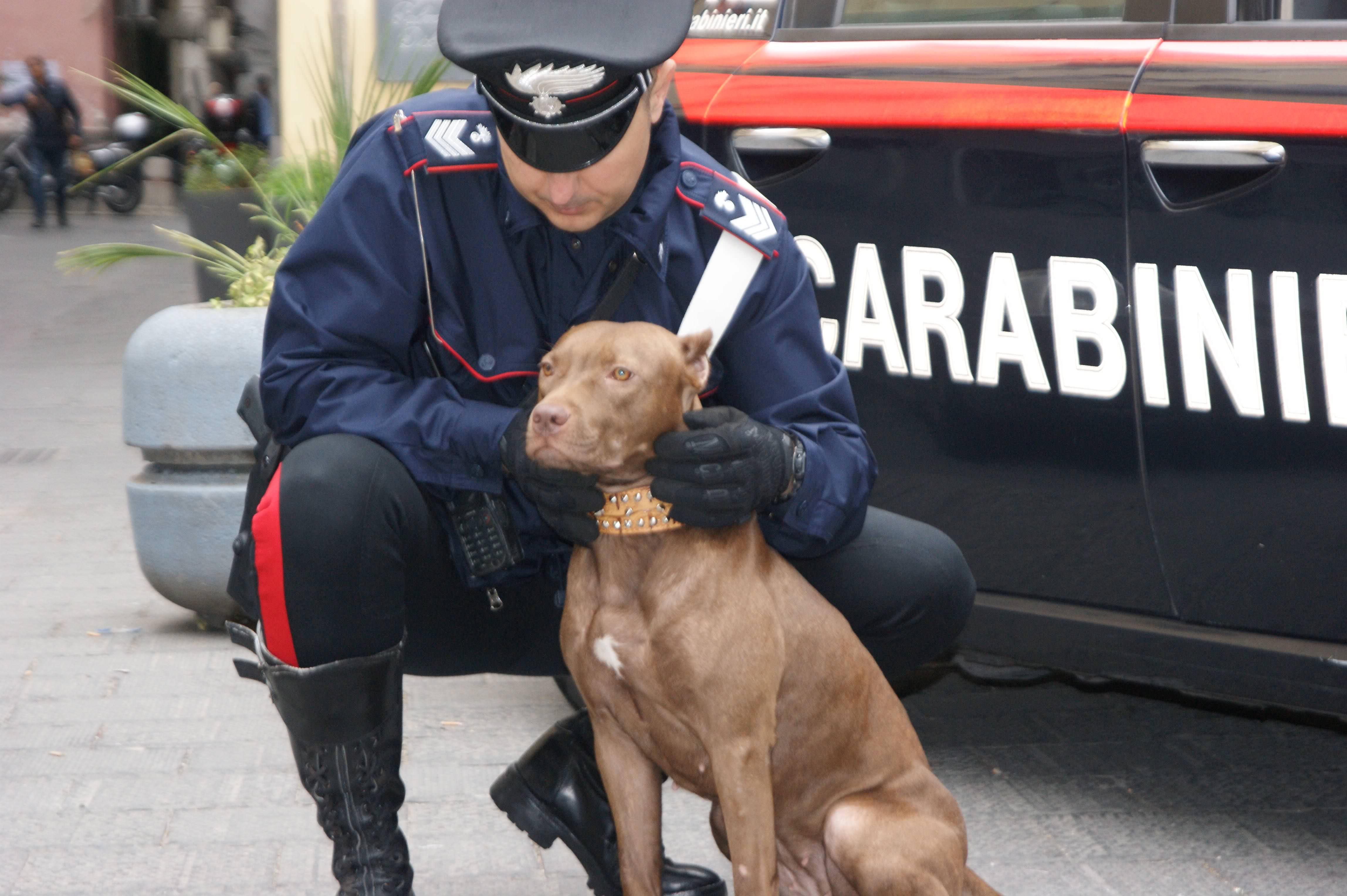 Violenze sugli animali: una taglia a Caltanissetta e un denunciato a Vittoria