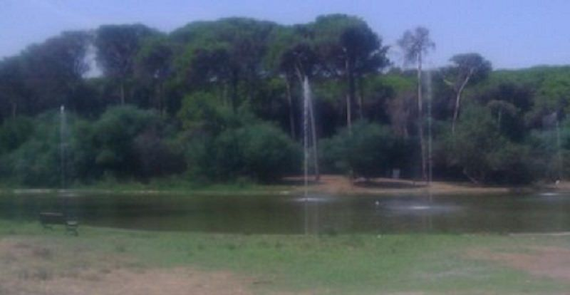 Playa di Catania, il boschetto si rigenera: diventerà luogo di eventi per l'ambiente