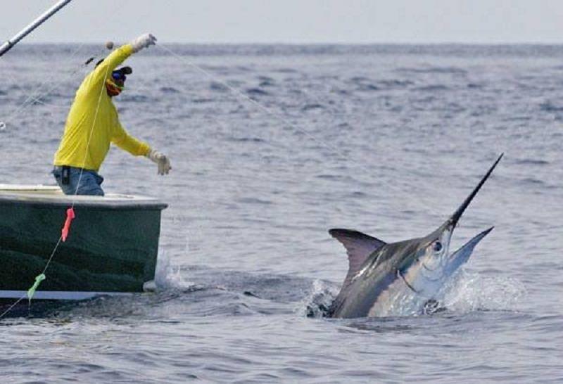 """Il pesce spada scarseggia nei nostri mari: Ue propone """"Fishexit"""", il fermo biologico"""