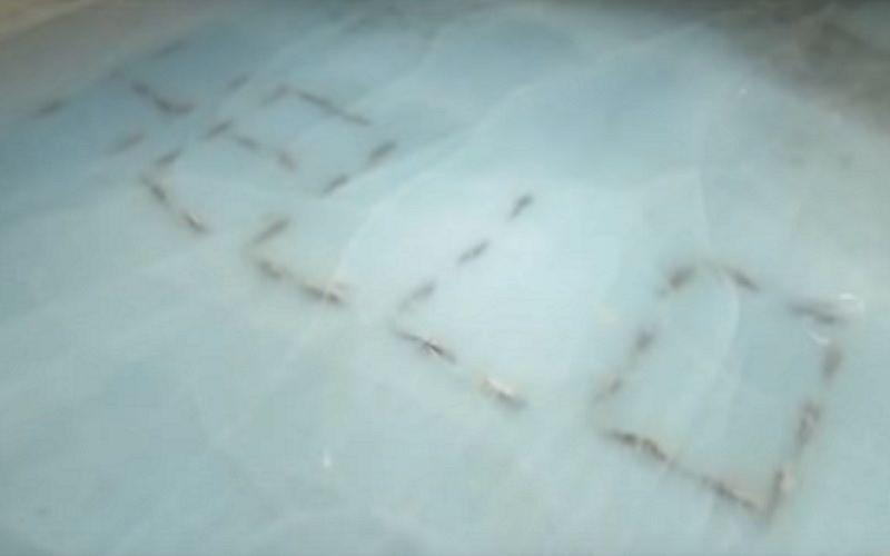 Si pattinava sui pesci morti: pista chiusa perché immorale