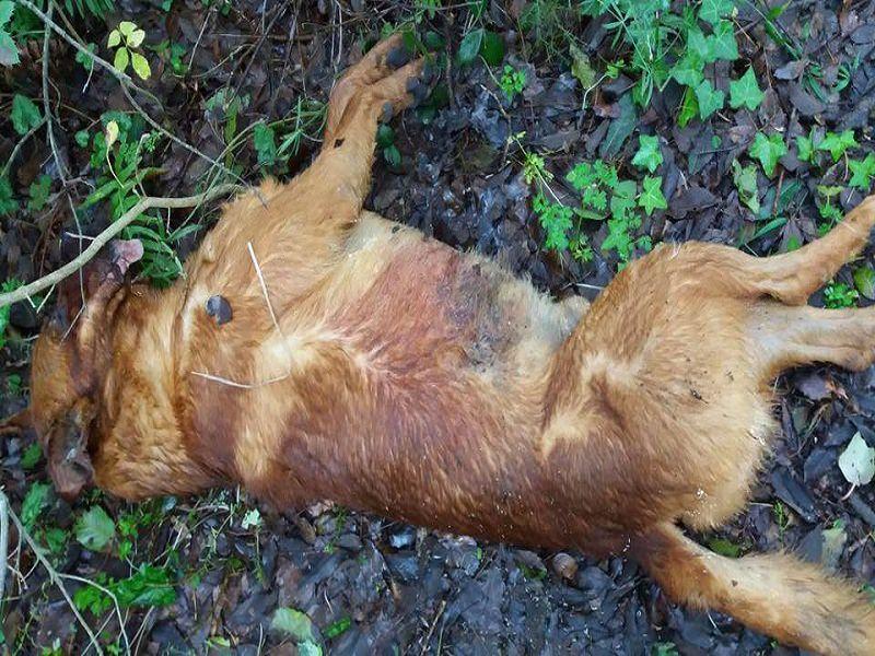 Cani avvelenati e uccisi: la strage degli innocenti non ha fine in Sicilia