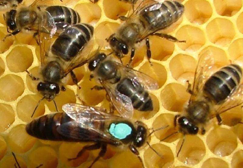 """Istituto zooprofilattico: """"Miele siciliano non contiene pesticidi"""""""