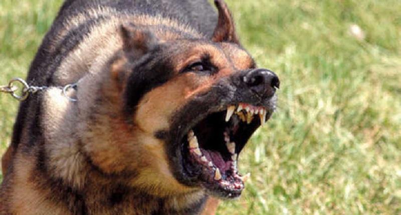 Carini: bimba di sei mesi azzannata al volto da un cane