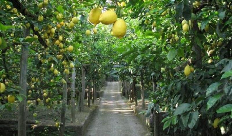 """""""100 tonnellate di agrumi rubati ogni giorno"""", Coldiretti Catania chiede aiuto alla Prefettura"""