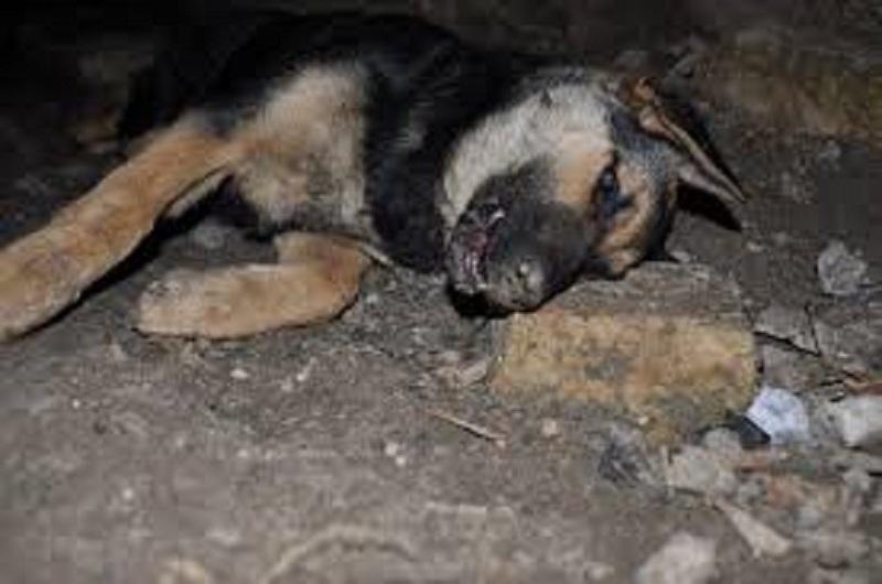 Avvelenamento cani: nuovi casi nel Catanese