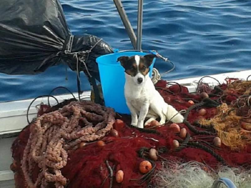 Abbandonato su una spiaggia isolata si getta in mare: cane salvato da un'imbarcazione di passaggio