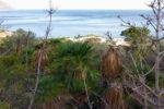 Paura alla Riserva dello Zingaro: ferita turista francese