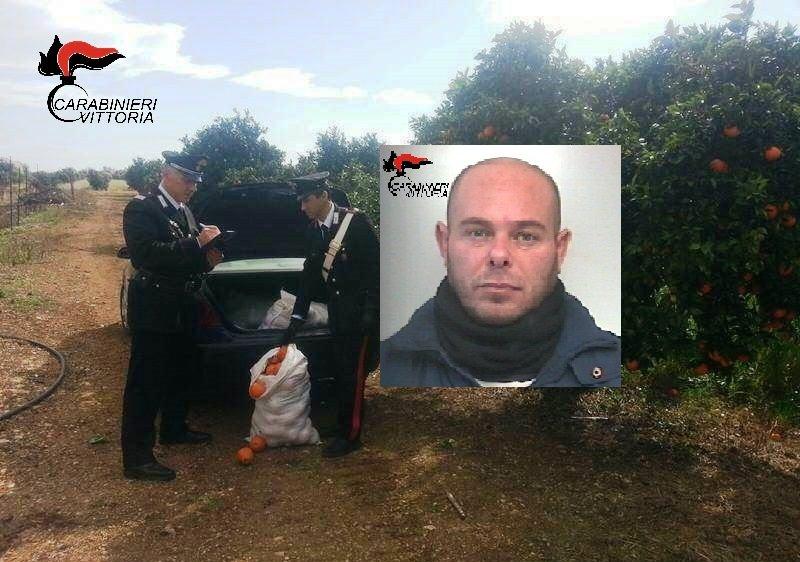 Sorpreso con 200 kg di arance appena rubate, arrestato 40enne