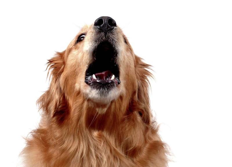 """Cani anti-diabete """"salvavita"""", i migliori amici del malato di tipo 1"""