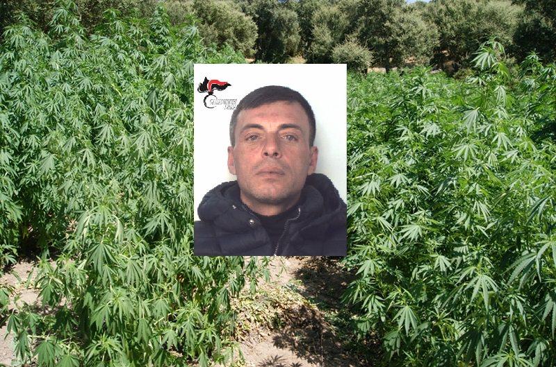 Prese in affitto sotto falso nome un terreno per coltivare 160 piante di marijuana. Arrestato latitante catanese. IL VIDEO