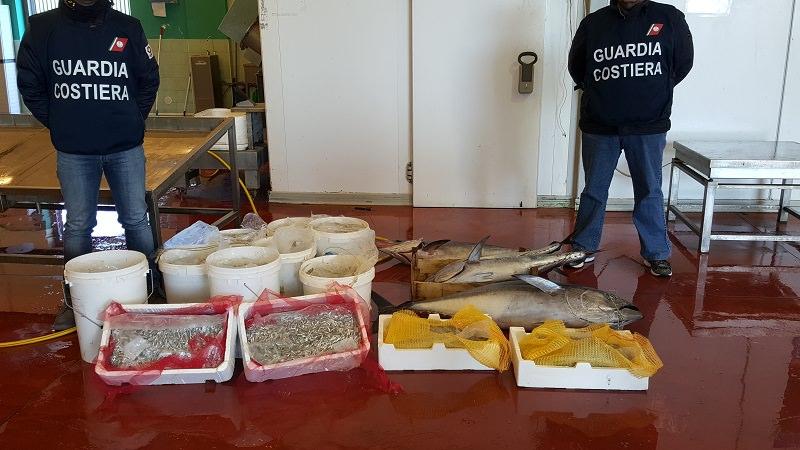 """Riposto, sequestrati circa 300 chili di """"muccu"""", tonno rosso e pesce spada"""