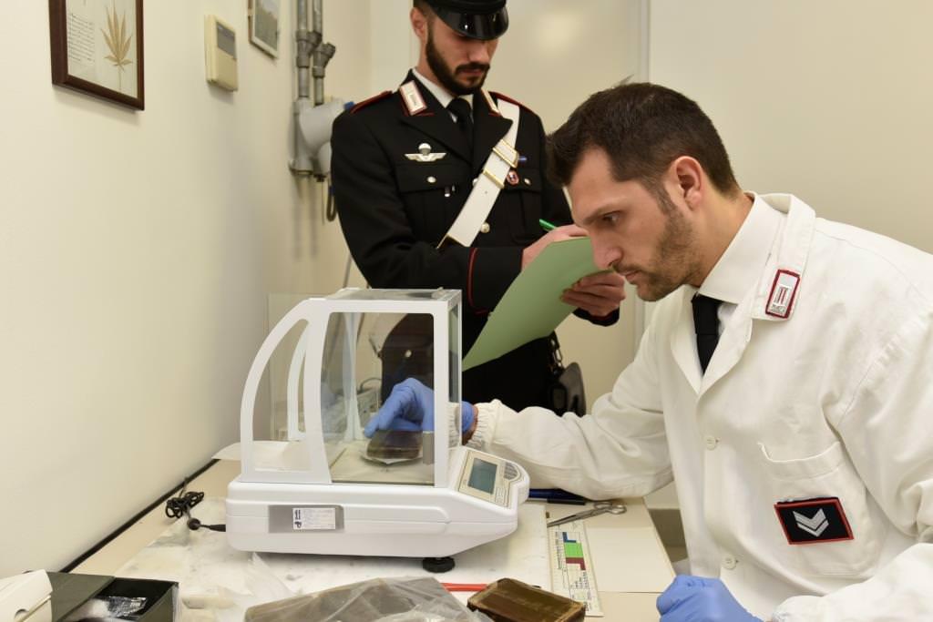 Palermo, 74 piante di marijuana nascoste in casa