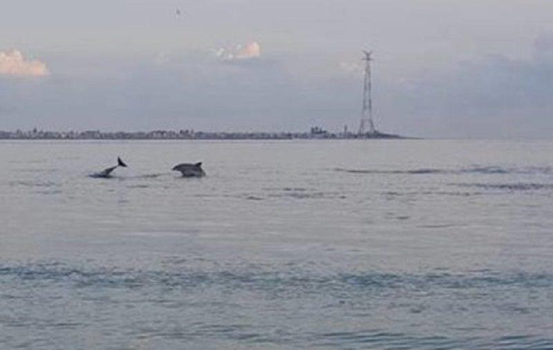 Il sole all'alba, la calma del mare, i delfini: la meraviglia della natura nello Stretto di Messina