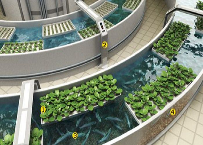 Metodo di coltura che rispetta l'ambiente, arriva l'acquaponica