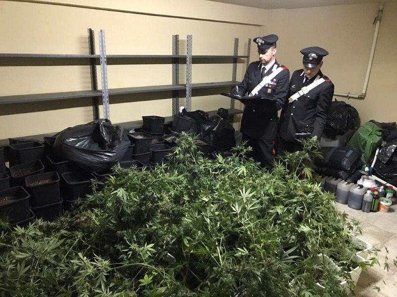 Zen: scoperta piantagione sotterranea di marijuana